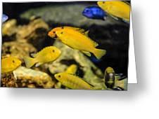 Yellow Reef Fish Greeting Card
