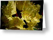 Yellow Rhododendron Greeting Card