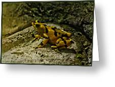 Yellow Rock Jumper Greeting Card