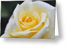 Yellow Rose - 1 Greeting Card