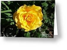 Yellow Rose #1 Greeting Card