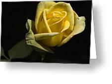 Yellow Rose 14 Greeting Card