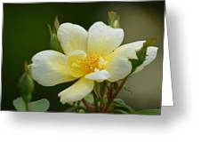 Yellow Rose 2013a Greeting Card