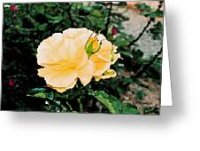Yellow Rose And Bud Greeting Card