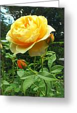 Yellow Rose And Buds Greeting Card