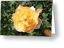 Yellow Rose And Two Rosebuds Greeting Card