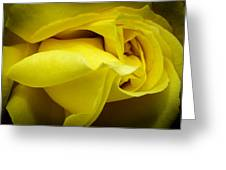 Yellow Rose Close Up. Greeting Card by Slavica Koceva