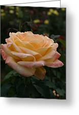 Yellow Rose Kissed By Pink Fairy Greeting Card