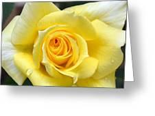 Yellow Rose L Greeting Card