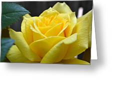 Yellow Rose Ll Greeting Card