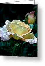 Yellow Rose Morning Dew Greeting Card