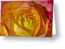 Yellow Rose Up Close Greeting Card