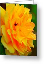 Yellow Rose With Lady Bug Greeting Card