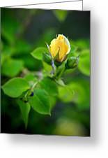 Yellow Rosebud Greeting Card