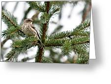 Yellow Rumped Evergreen Greeting Card