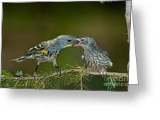 Yellow-rumped Warbler Feeding Young Greeting Card