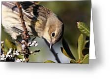 Yellow-rumped Warbler - Precious Greeting Card