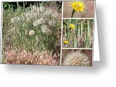 Yellow Salsify Collage Greeting Card