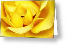 Yellow Sapphire Rose Palm Springs Greeting Card