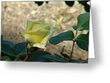 Yellow Satin Greeting Card