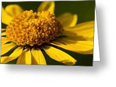 Yellow Saucer Greeting Card