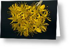 Yellow Sedum Greeting Card