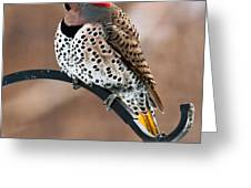 Yellow-shafted Northern Flicker Greeting Card