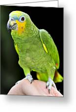 Yellow-shouldered Amazon Parrot Greeting Card