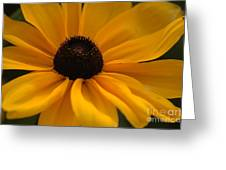 Yellow Silk Greeting Card