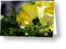 Yellow Snapdragons I Greeting Card by Aya Murrells