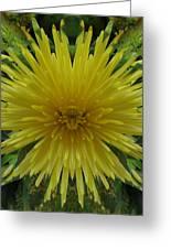 Yellow Spider Mum Greeting Card