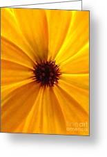 Yellow Splendour Greeting Card