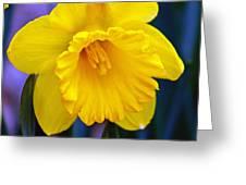 Yellow Spring Daffodil Greeting Card