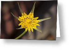 Yellow Star Flower Greeting Card