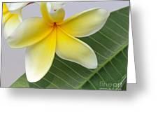 Yellow Star Plumeria Greeting Card