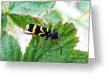 Yellow Stripped Beetle Greeting Card