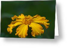 Yellow Sun Burst...   # Greeting Card