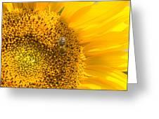 Yellow Sunflower - Detail Greeting Card