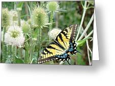 Yellow Swallowtail Butterfly Greeting Card