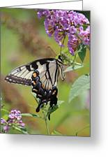 Yellow Swallowtail Butterfly Taking A Drink Greeting Card