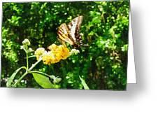 Yellow Swallowtail On Yellow Lantana Greeting Card