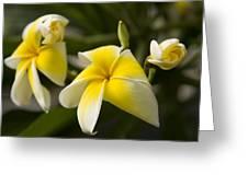 Yellow Swirl Greeting Card