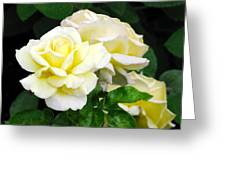 Yellow Tea Roses Greeting Card
