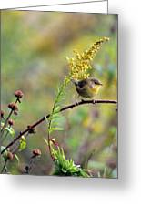 Yellow Throat In Late Summer Prairie Greeting Card