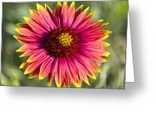 Yellow Tips Greeting Card