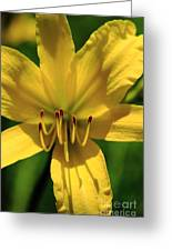 Yellow Too Lily Flower Art Greeting Card