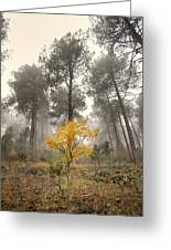 Yellow Tree In The Foggy Forest Greeting Card