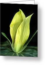 Yellow Trillium Greeting Card
