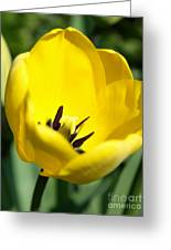 Yellow Tulip Cup Greeting Card