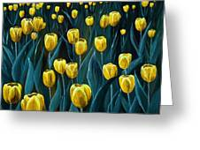 Yellow Tulip Field Greeting Card